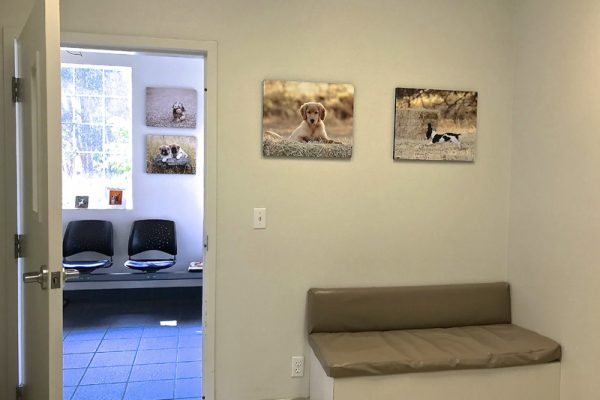 You'll be welcomed into one of three exam rooms, each equipped with a bench for you and your pet.
